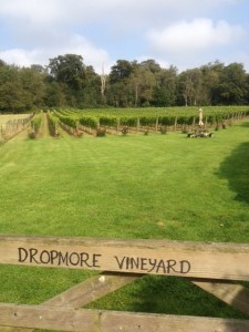 Dropmore Vineyard